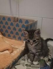 2 süße Katzen weiblich