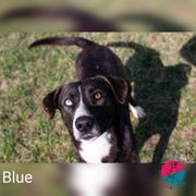 Blue - Will am liebsten der