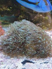 diverse Korallen und Korallenableger von