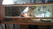 Terrarium 2 Leopardgecko Mädels