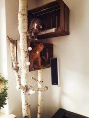 Bio Kratzsäule Kletterbaum Kratzmöbel Naturkratzbaum