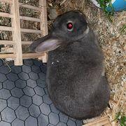 Kaninchen Paar sucht dringend schönes
