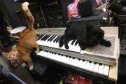 Coverrockband sucht Keyboarder