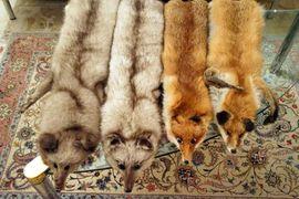 Leder-/Pelzbekleidung, Damen und Herren - 3 Fuchskrägen - Beste Qualität