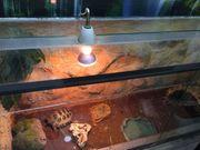 Schildkröte mit Terrarium