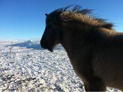 Pflegebeteiligung Mensch sucht Pony