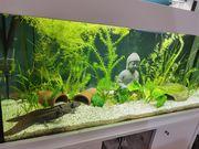 4er Truppe Axolotl