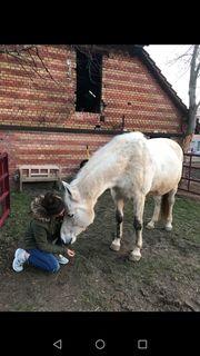 Reiterin sucht Pferd Suche Reit-