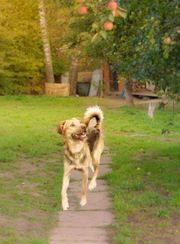 Hundekind Fynn sucht sein Zuhause