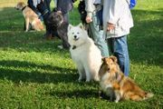 Hundeführerschein Sachkundeprüfung D O Q