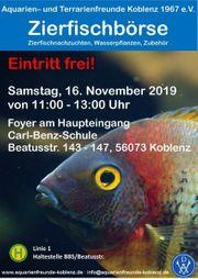 ZIERFISCHE In Koblenz