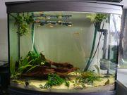 Aquarium und Unterschrank inkl Heizstab