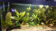 2 Aquarium 54l 60x30x30cm