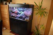 Meerwasseraquarium Red Sea Max 250