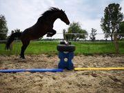 Reitbeteiligung Pferd sucht