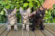 Trio sucht ein Zuhause