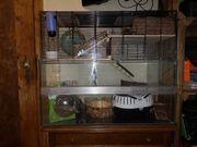 Hamstervilla mit Komplettausstattung