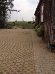 Offenstallplatz für 2-3 Ponys Kleinpferde