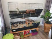 Meerschweinchen Käfig zweistöckig