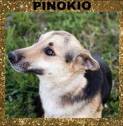 PINOKIO ist freundlich und verträglich