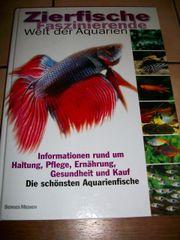 Zierfische - Faszinierende Welt der Aquarien -