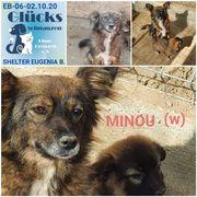 Minou sucht ein wundervolles Zuhause