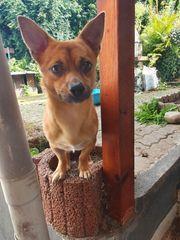 Chico - Ein kleiner Prinz