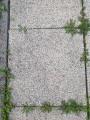 Terrassenplatten Naturstein