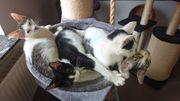 mehrere zutraulich Tierschutz - Katzen - Kinder
