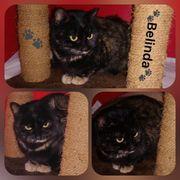 Wunderschöne Katze Belinda 1 Jahr