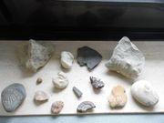 Fossilien Versteinerungen Mineralien Ammoniten Schnecken