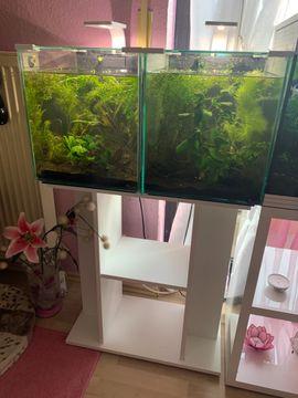 Fische, Aquaristik - 2 Aquarien mit Unterschrank Pflanzen