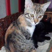 Kätzchen Sila sucht ihre Menschen