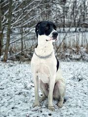 Aktiver und anspruchsvoller Hund sucht