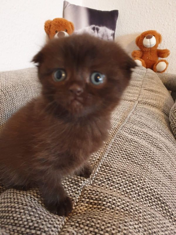Süße Kätzchen noch 1 Mädchen