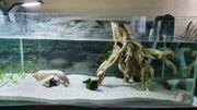 Axolotl Aquarium komplett Kühler