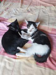 Katzenbabys vom Tierschutz