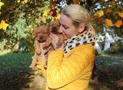 Labrador foxred mit Stammbaum