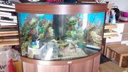Komplett-Aquarium 190L