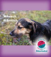 Mikesch - im Shelter geboren