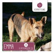 Emma - eine Seniorin zum Knutschen