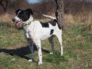 VESNA - Begeisterte Wander-Hundefreunde bevorzugt