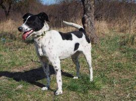 Bild 4 - VESNA - Begeisterte Wander-Hundefreunde bevorzugt - Rabenau
