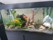 Aquarium 126 l ohne Inhalt