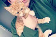 Suche Babykatze Weiblich