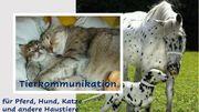 Tierkommunikation Pferd Hunde Katze Tel