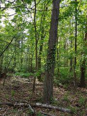 Verkauf Mischwald 2 6 ha -