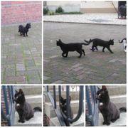 Wunderschöne Katze Bibi sucht ihr