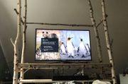 TV Möbel Birkenstämme Birkenbaumstamm Birken