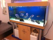 komplette Aquarium mit Inhalt und